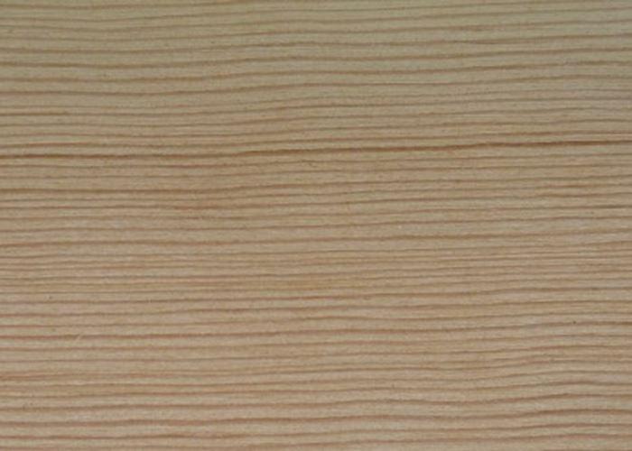 Sitka Spruce (North American)